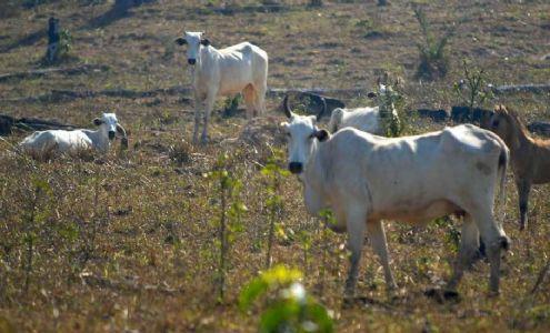 'Pai das águas do Brasil', 43,8% do Cerrado hoje é utilizado para agropecuária, diz MapBiomas (Crédito: Arquivo/Agência Brasil)