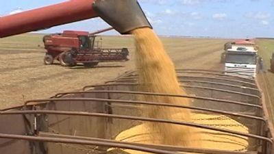 Mato Grosso é Estado com maior Valor Bruto da Produção Agropecuária