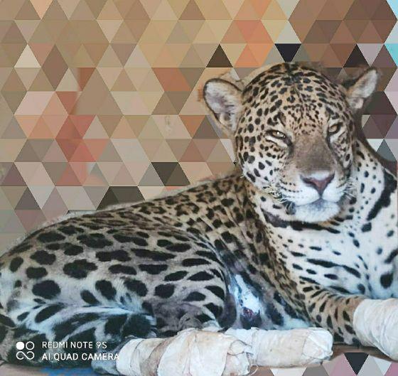 MMA cria Programa Nacional de Resgate de Fauna Silvestre