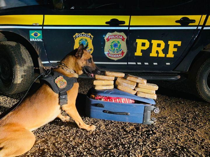 Cão farejador encontra 11 Kg de droga em mala e passageira é presa