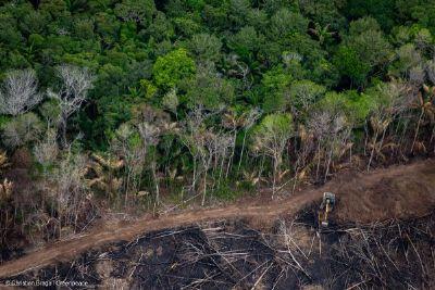 DETER confirma tendência de aumento dos alertas de desmatamentos e junho tem novo recorde