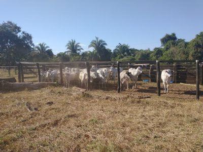 Polícia Civil recupera 34 cabeças de gado furtadas e prende suspeito de receptação